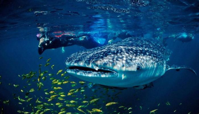 Travelonline Philippines Travel Agency Cebu